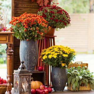 διάφορα σε ωηλά βα΄ζα για διακόσμηση γάμου φθινοπωρινά λουλούδια