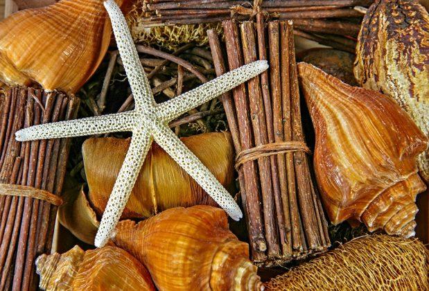 Διακοσμητική σύνθεση με κοχύλια και δεμένα θαλασσόξυλα